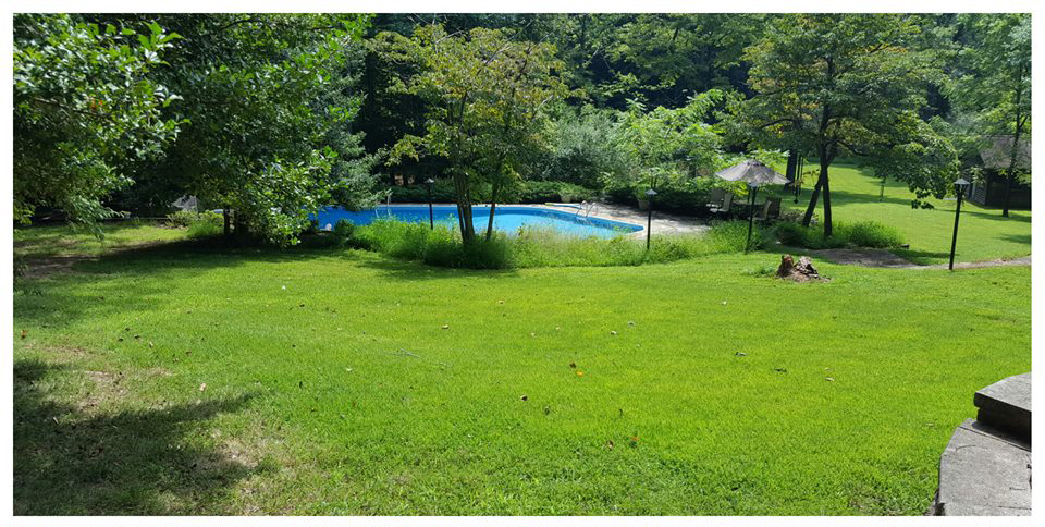 Lush Green Grass Rejuvenated Lawn Fredericksburg Virginia
